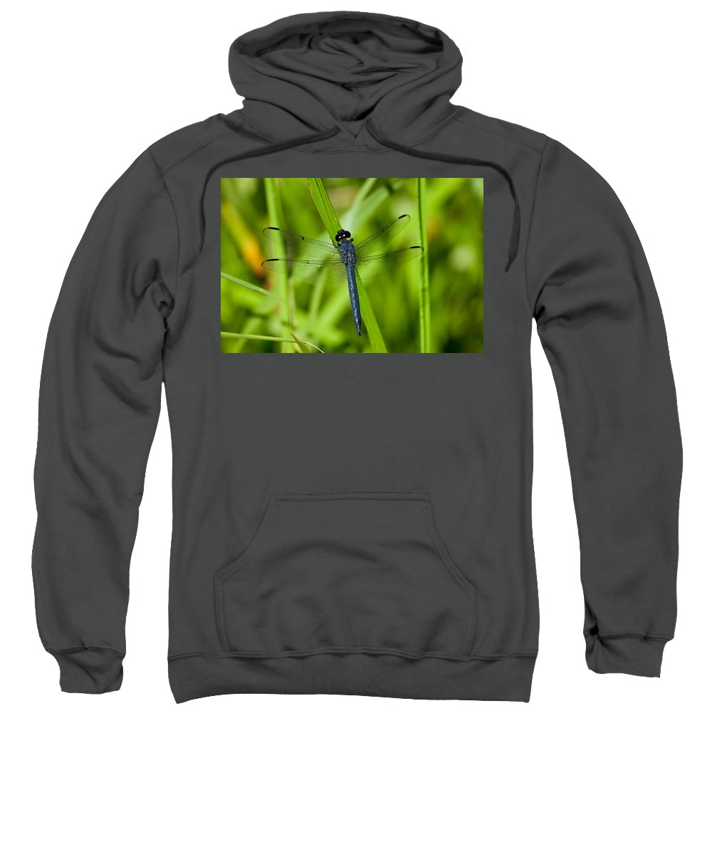 Insect Sweatshirt featuring the photograph Just Resting by Karol Livote