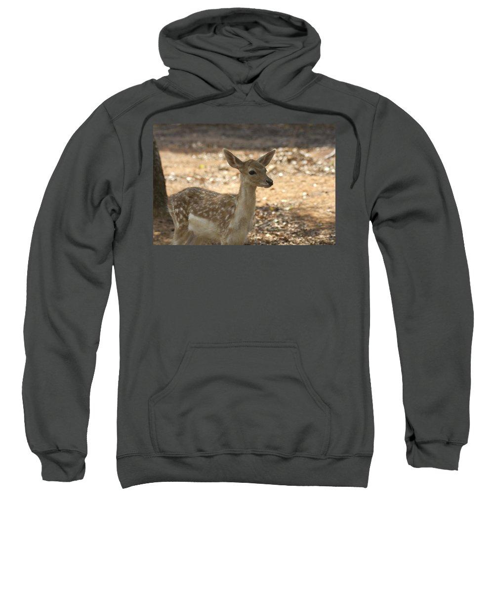 Juvenile Deer Sweatshirt featuring the photograph Juvenile Deer by Douglas Barnard