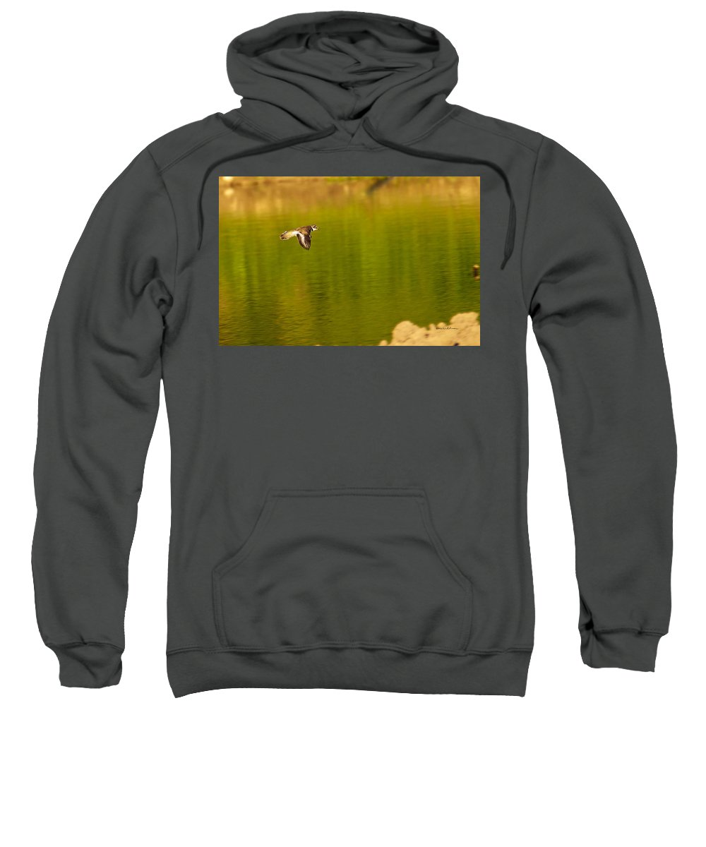 Killdeer Sweatshirt featuring the photograph Killdeer In Flight by Edward Peterson