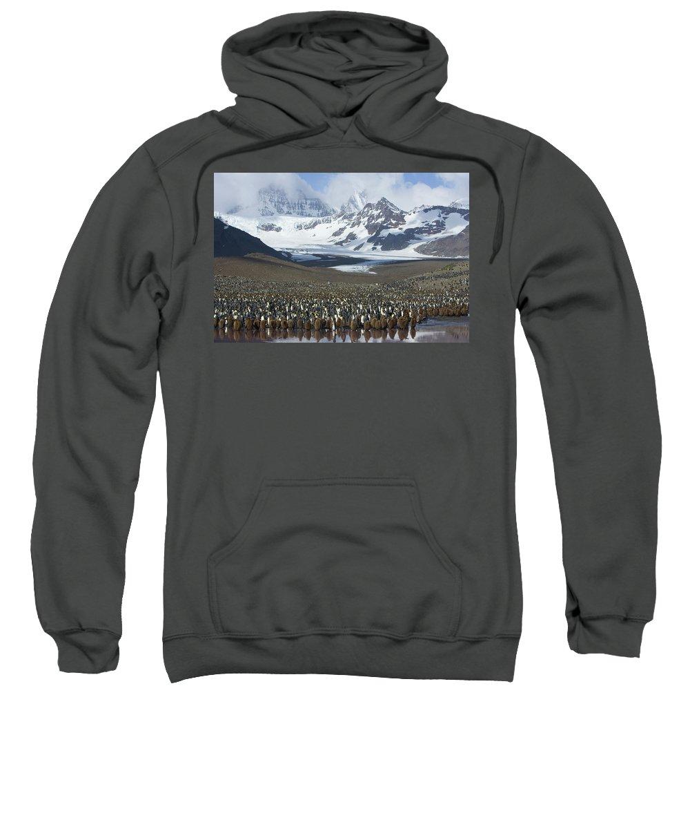 Mp Sweatshirt featuring the photograph King Penguin Aptenodytes Patagonicus by Suzi Eszterhas