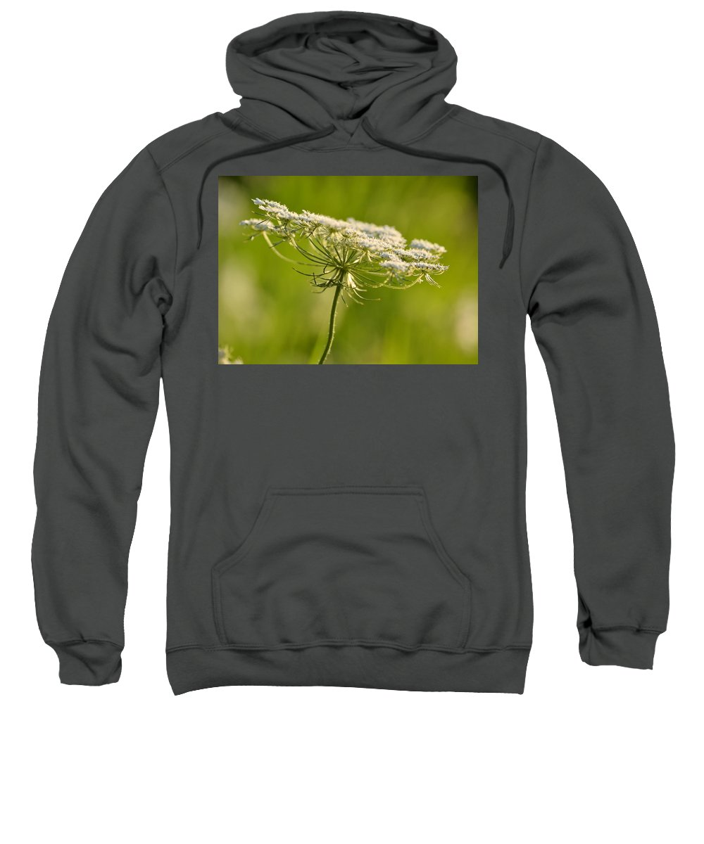 Queen Annes Lace Sweatshirt featuring the photograph Lacy White Flower by JD Grimes