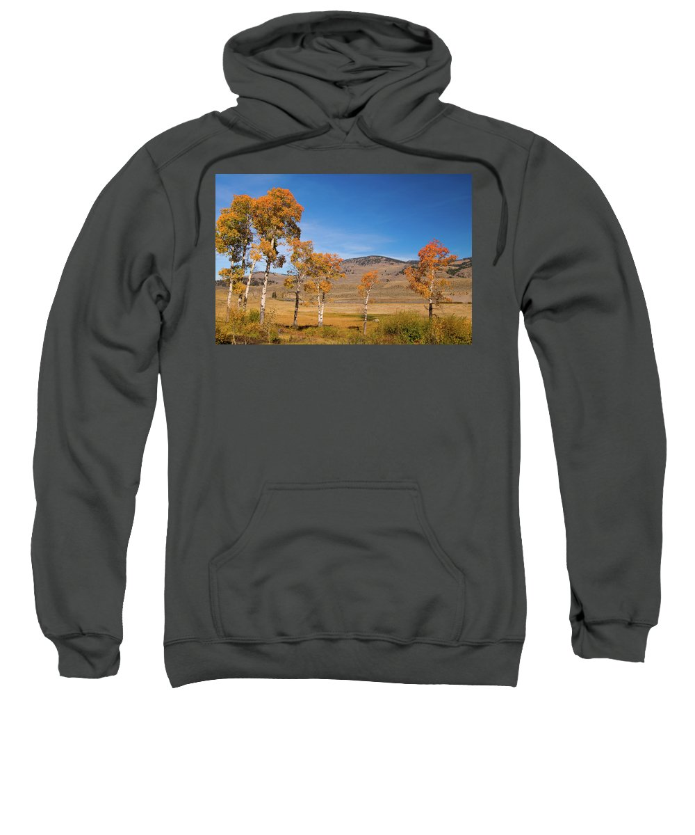 Yellowstone Sweatshirt featuring the photograph Lamar Valley Aspens by Steve Stuller