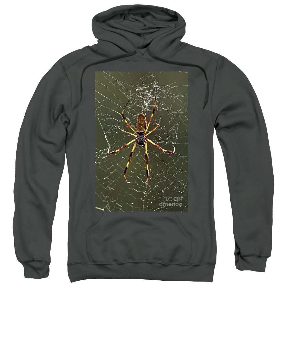 Spider Sweatshirt featuring the photograph Laying In Wait by Bob Christopher