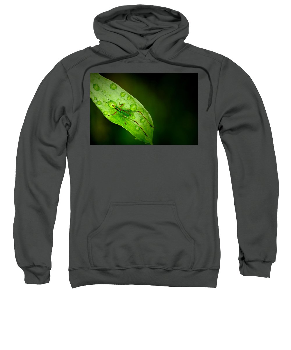 Leafhopper Sweatshirt featuring the photograph Leafhopper 2 by David Weeks