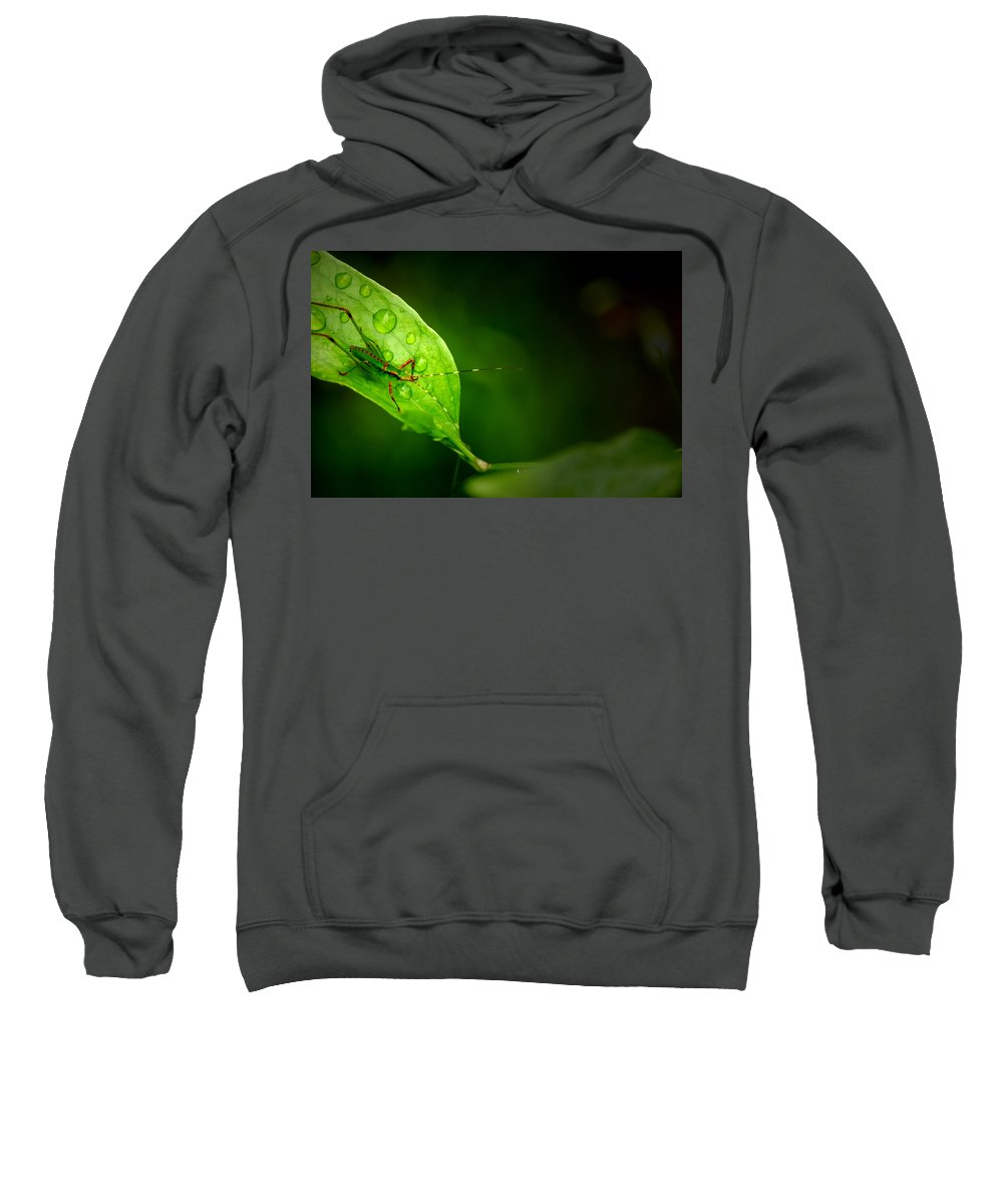 Leafhopper Sweatshirt featuring the photograph Leafhopper 3 by David Weeks