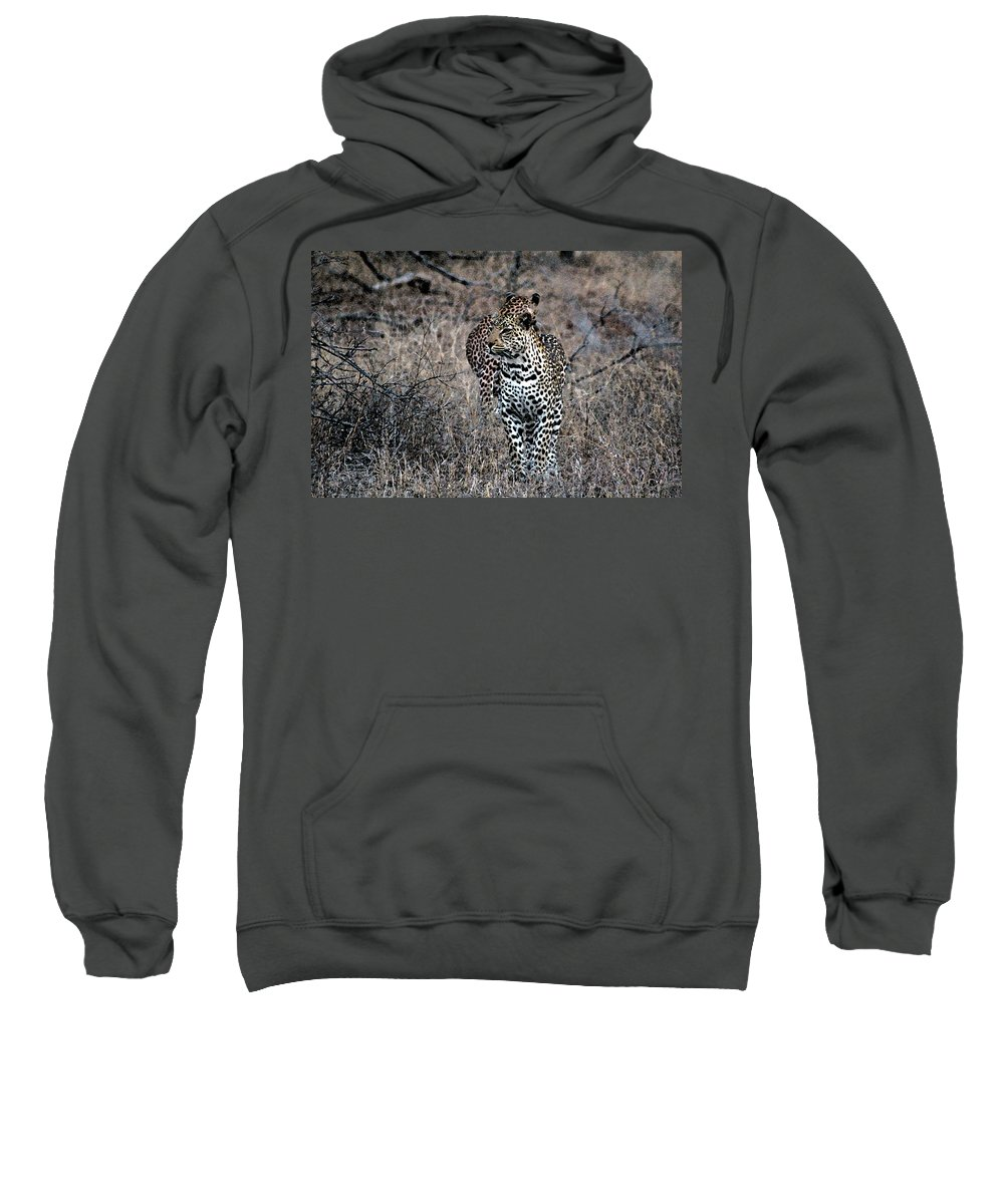 Animal Sweatshirt featuring the photograph Leopard Hunt by Paul Fell