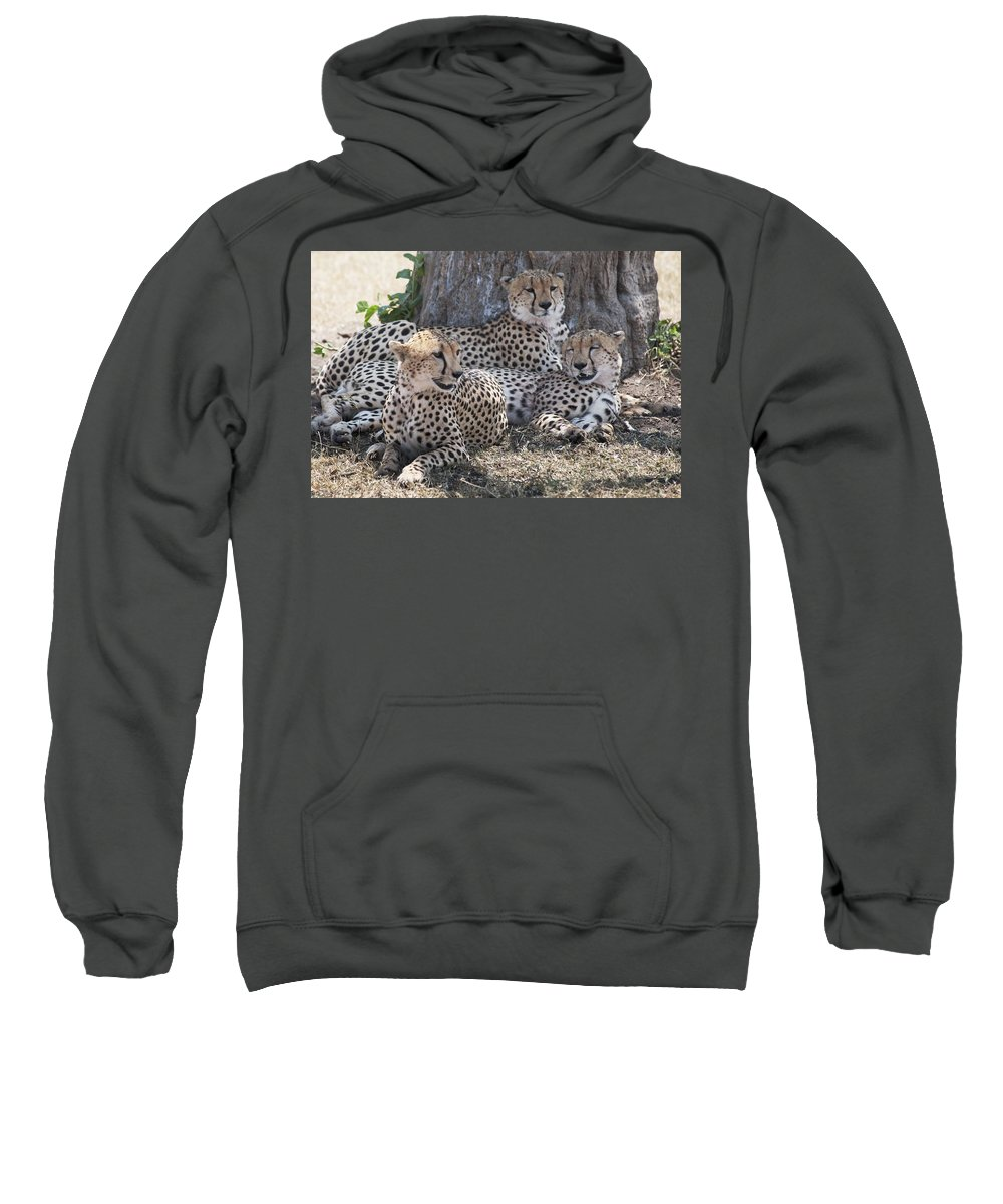 Animal Sweatshirt featuring the photograph Leopards, Kenya, Africa by Keith Levit