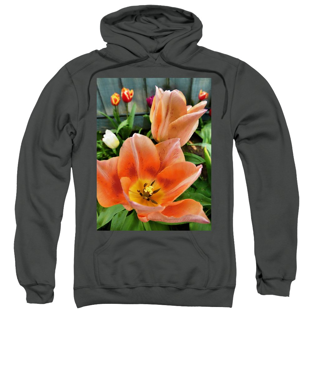 Dance Sweatshirt featuring the photograph Lets All Dance For The Tulips Are Out by Steve Taylor