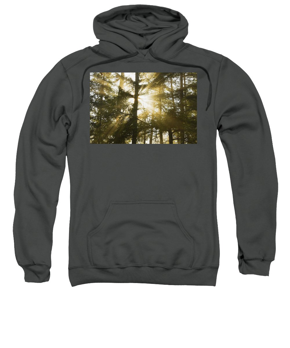 Fog Sweatshirt featuring the photograph Light Beams Shining Through Trees And Fog by Keith Webber Jr