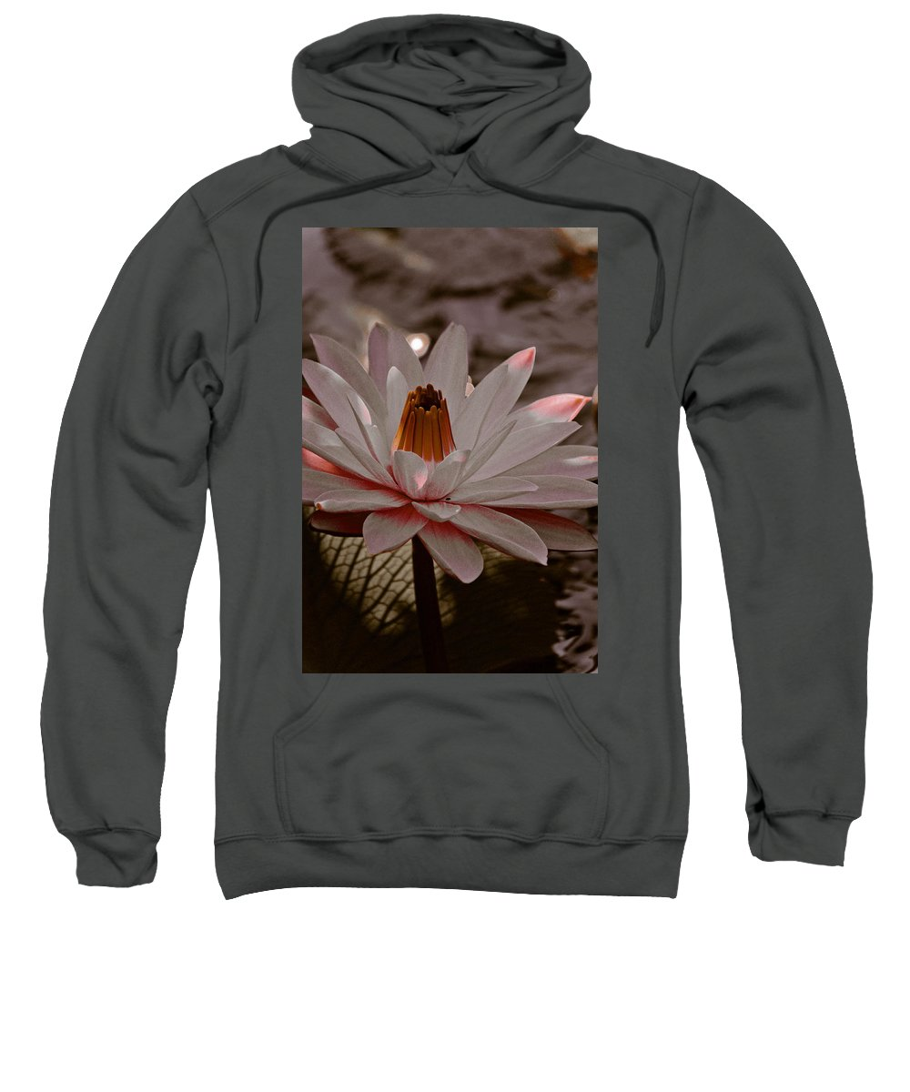 Lily Sweatshirt featuring the photograph Lil Peachy by Trish Tritz