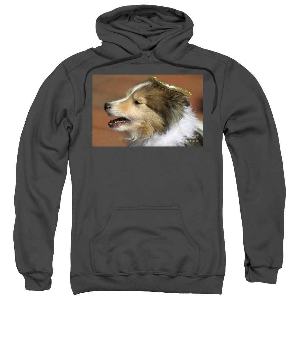 Dogs Sweatshirt featuring the photograph Little Angel by Living Color Photography Lorraine Lynch