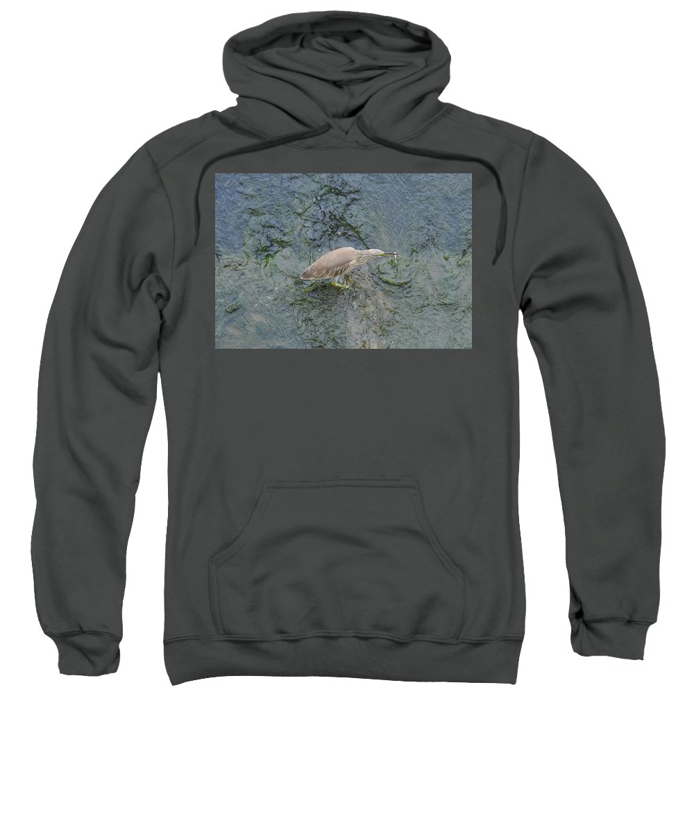 Bird Sweatshirt featuring the photograph Little Bittern by Rich Bodane
