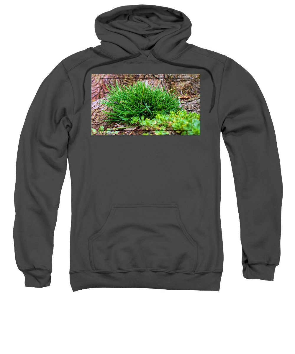 Nature Sweatshirt featuring the photograph Little Grass Mound by Debbie Portwood