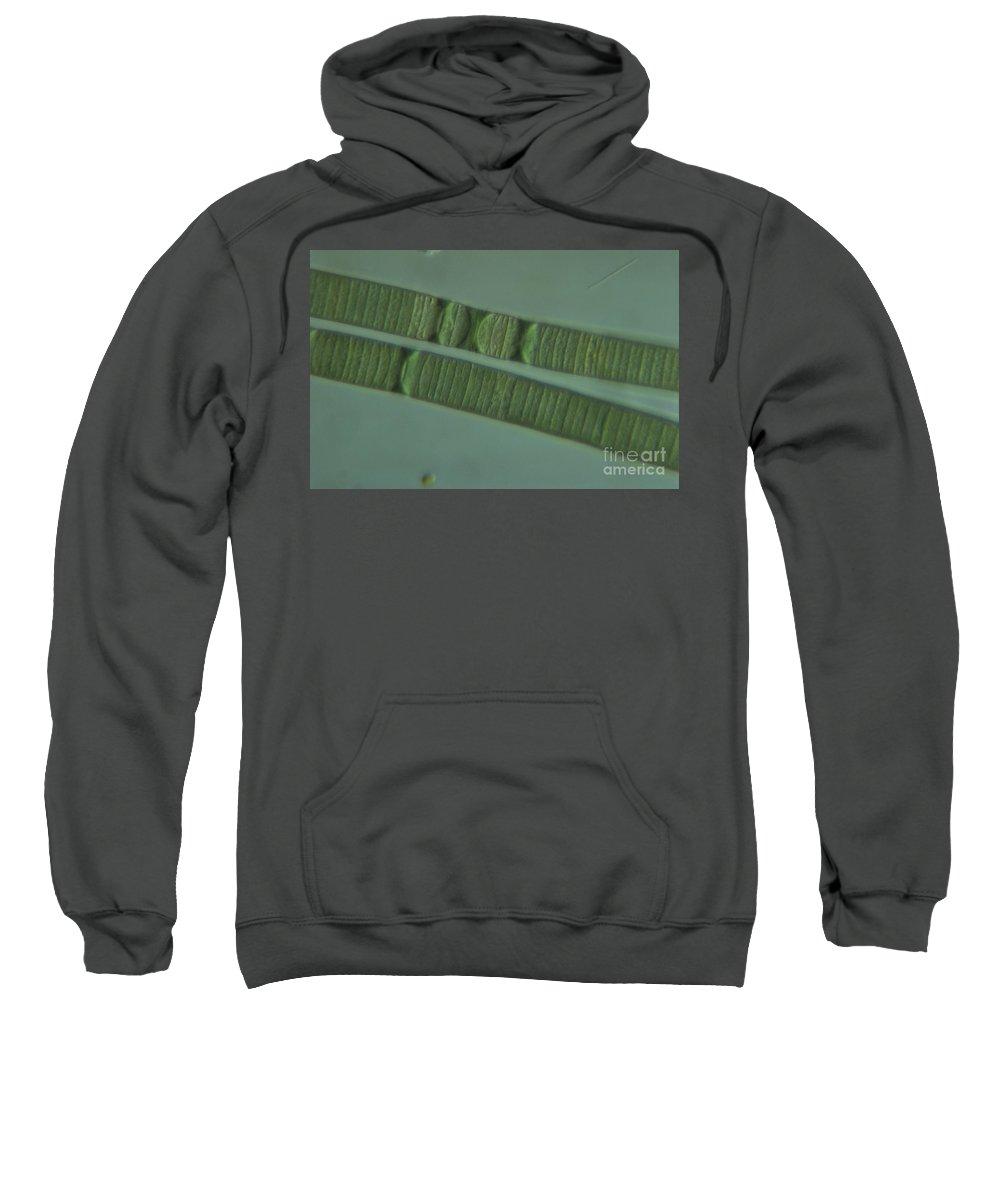 Cyanobacteria Sweatshirt featuring the photograph Living Oscillatoria, Dic by M. I. Walker