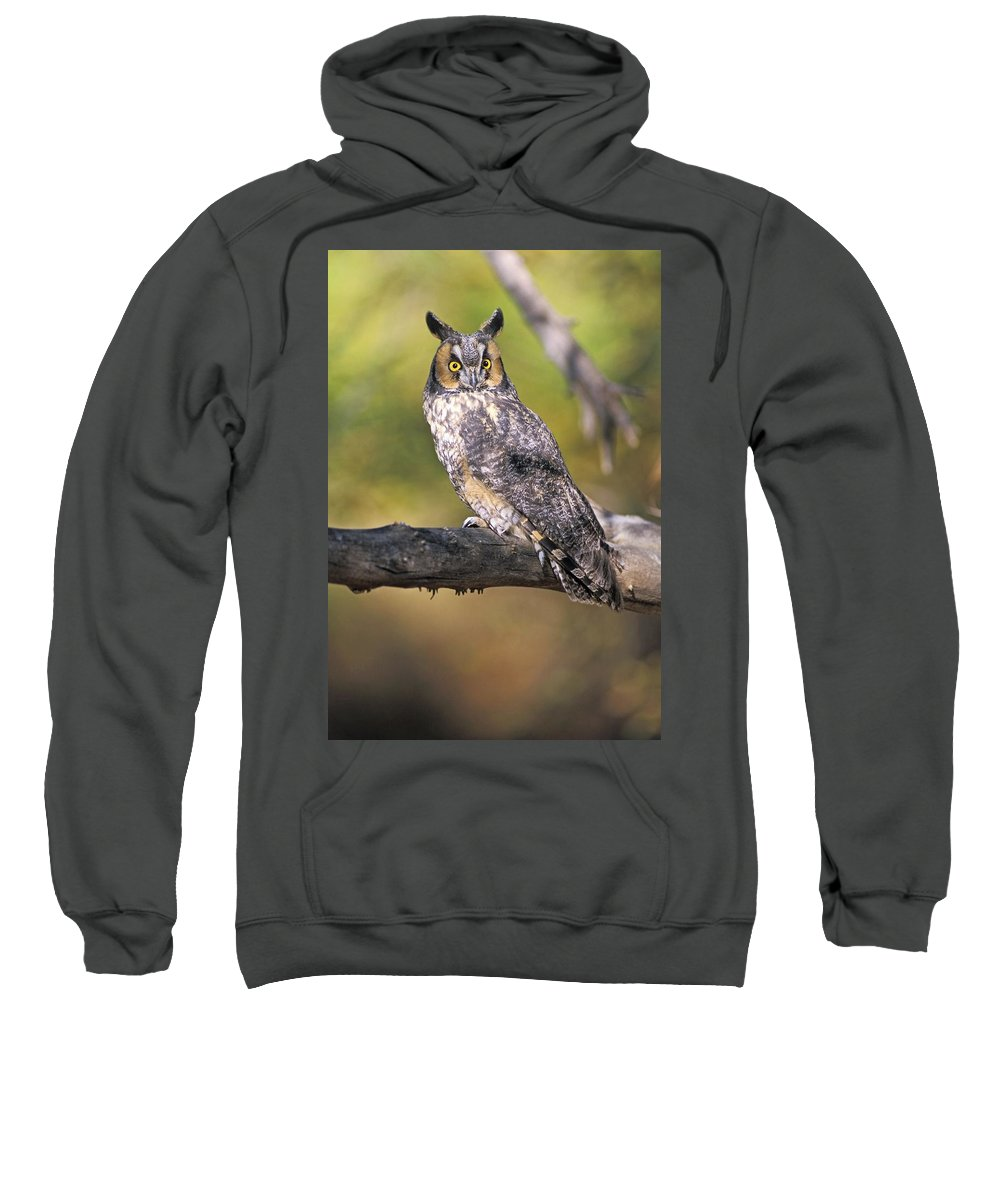Animal Sweatshirt featuring the photograph Long Eared Owl On Branch by John Pitcher