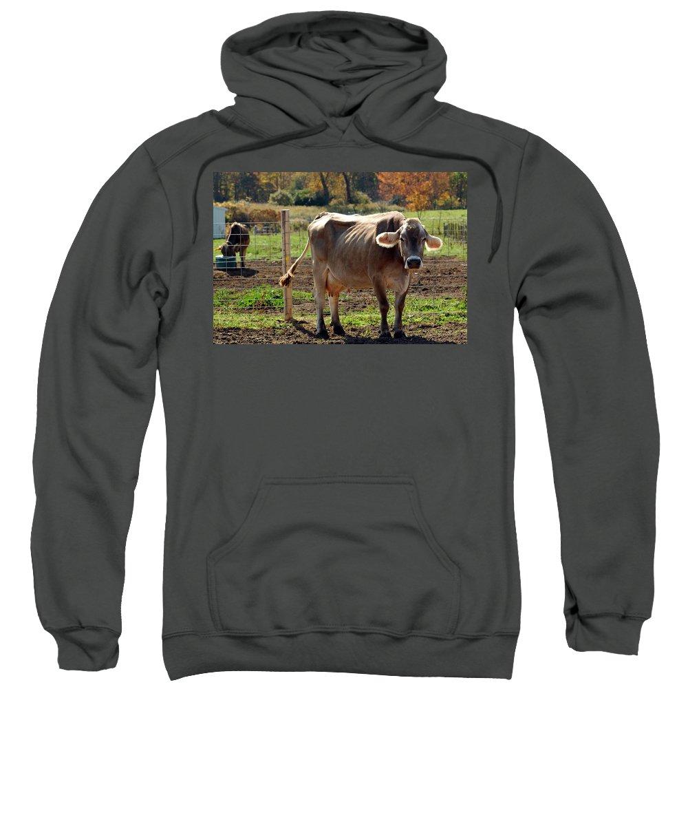 United_states Sweatshirt featuring the photograph Low Cow by LeeAnn McLaneGoetz McLaneGoetzStudioLLCcom