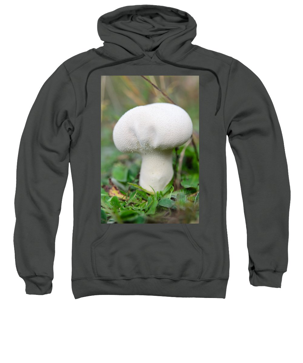 Lycoperdon Sweatshirt featuring the photograph Lycoperdon by Michael Goyberg