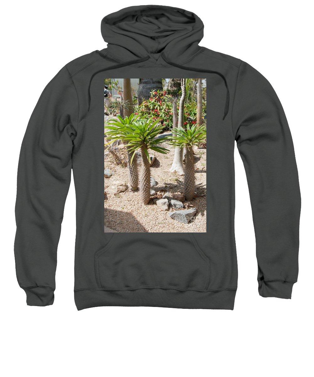 Balboa Park Sweatshirt featuring the digital art Madagascar Palms by Carol Ailles