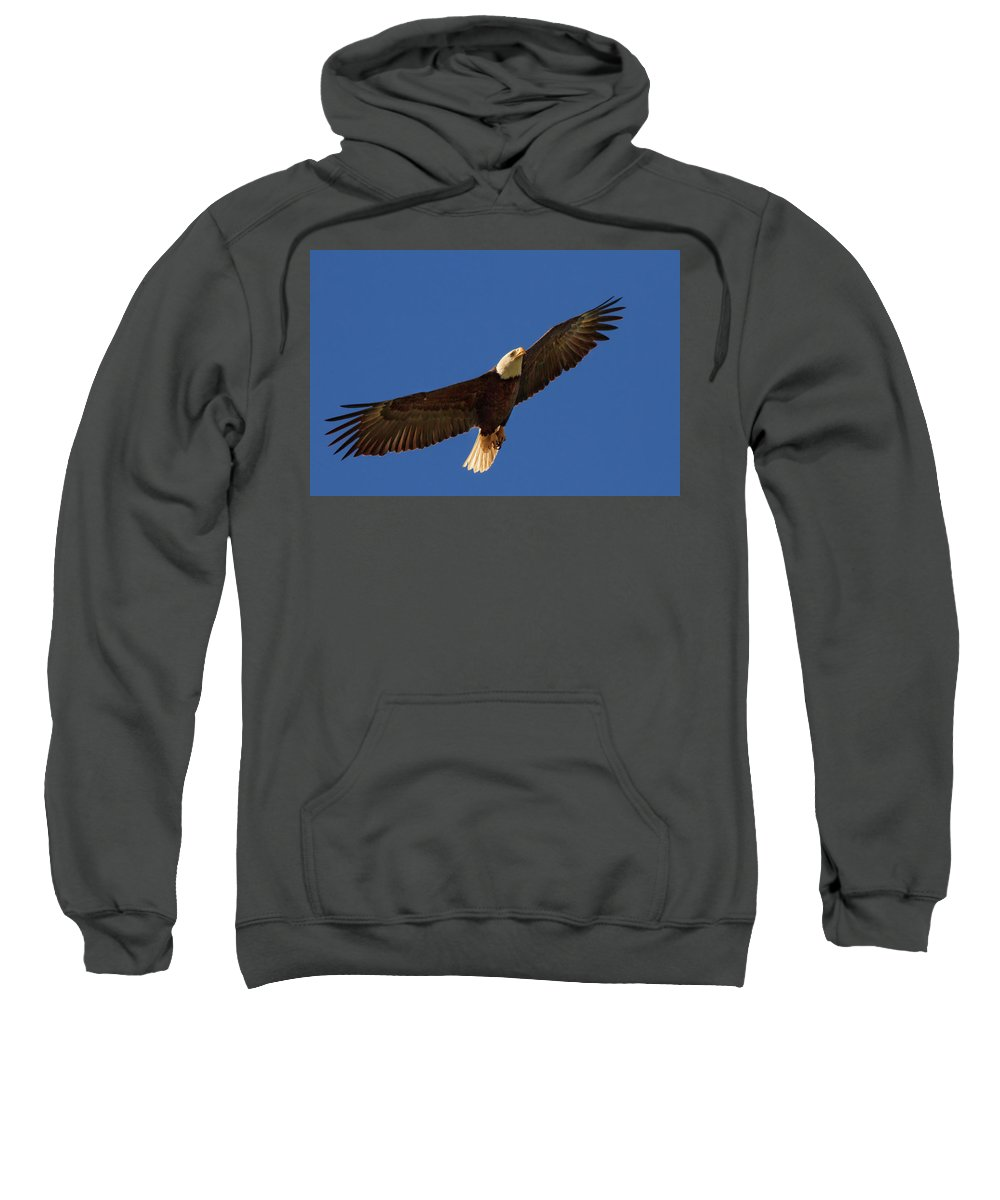 Bald Eagle Sweatshirt featuring the photograph Majestic Bald Eagle by Beth Sargent