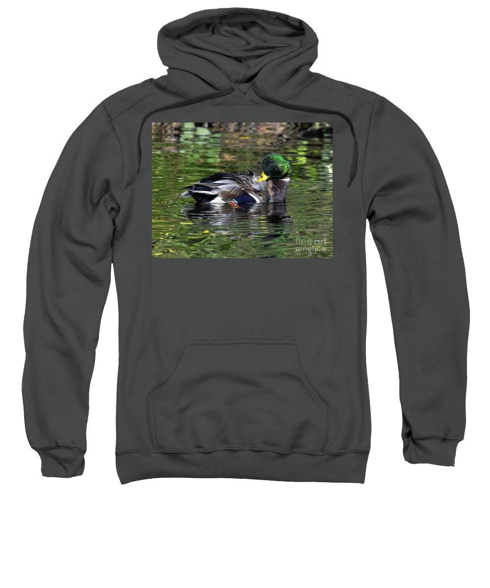 Mallard Sweatshirt featuring the photograph Mallard Preening Hdr by Sharon Talson