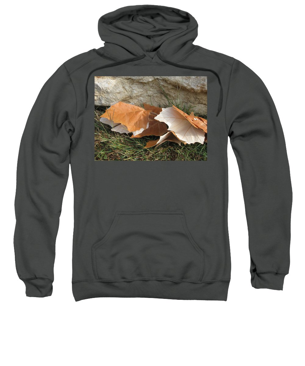 Maple Leaf Sweatshirt featuring the photograph Maple Leaves Contrasted by Cindy Clements