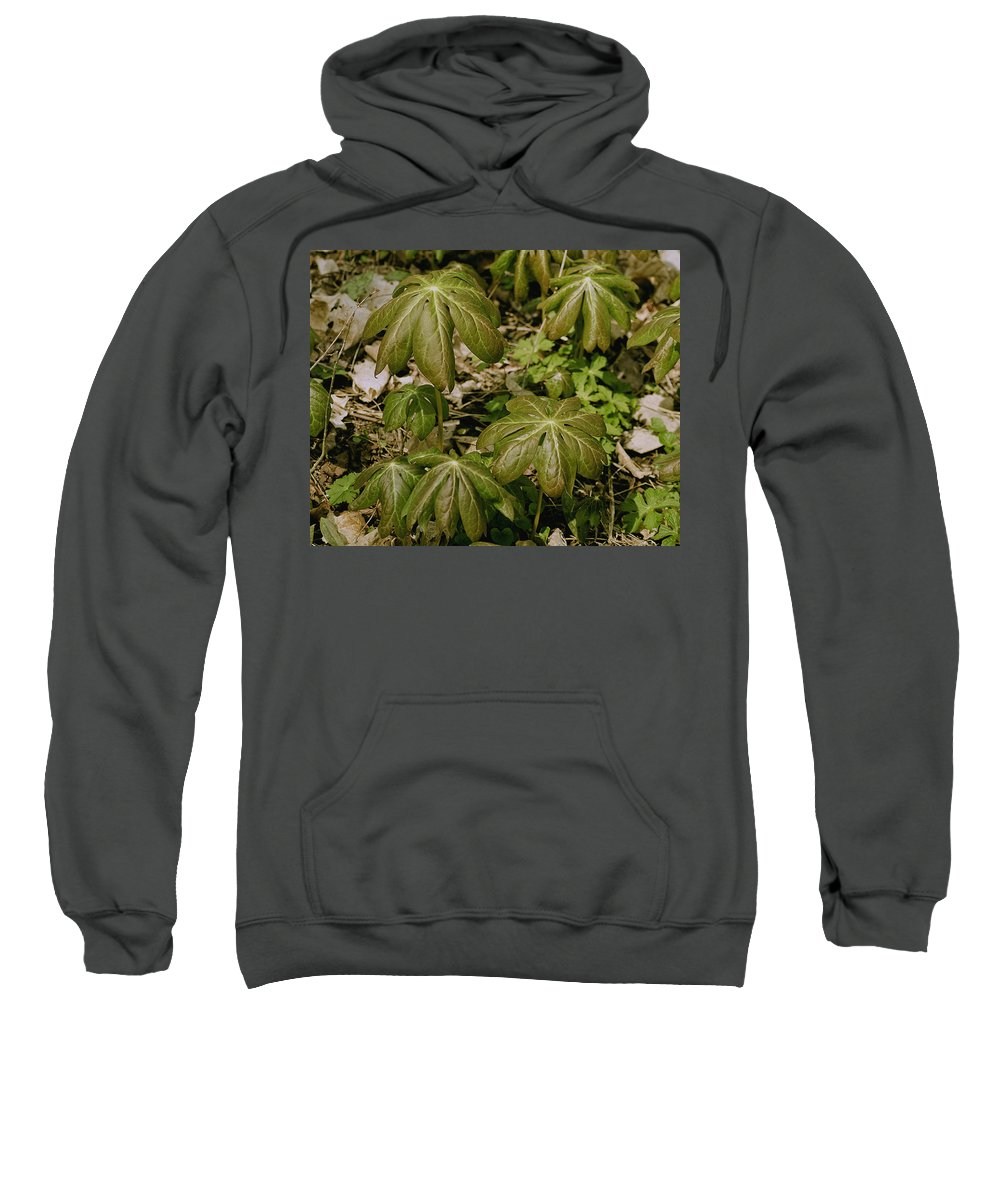 Usa Sweatshirt featuring the photograph May Apples by LeeAnn McLaneGoetz McLaneGoetzStudioLLCcom