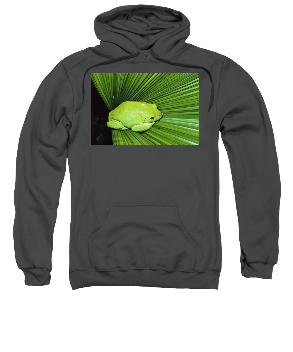 Camouflage Sweatshirt featuring the photograph Mexican Giant Tree Frog Pachymedusa by San Diego Zoo