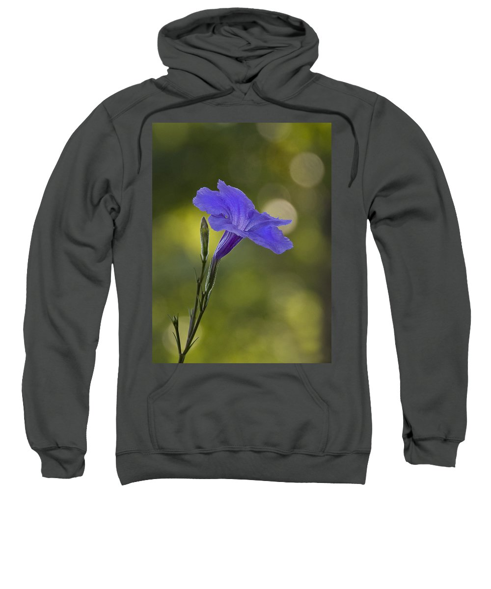 Mexican Petunia Sweatshirt featuring the photograph Mexican Petunia by Steven Richardson