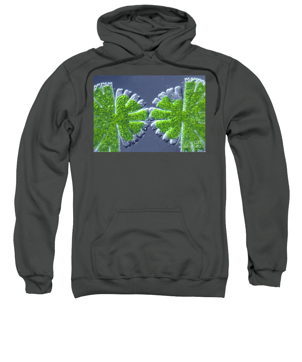 Light Microscopy Sweatshirt featuring the photograph Micrasterias Rotata by M. I. Walker