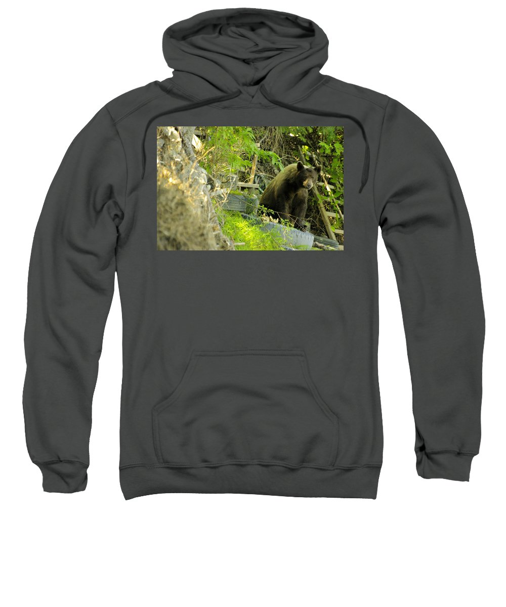 Bear Sweatshirt featuring the photograph Midway - Backyard Bear by John Greaves