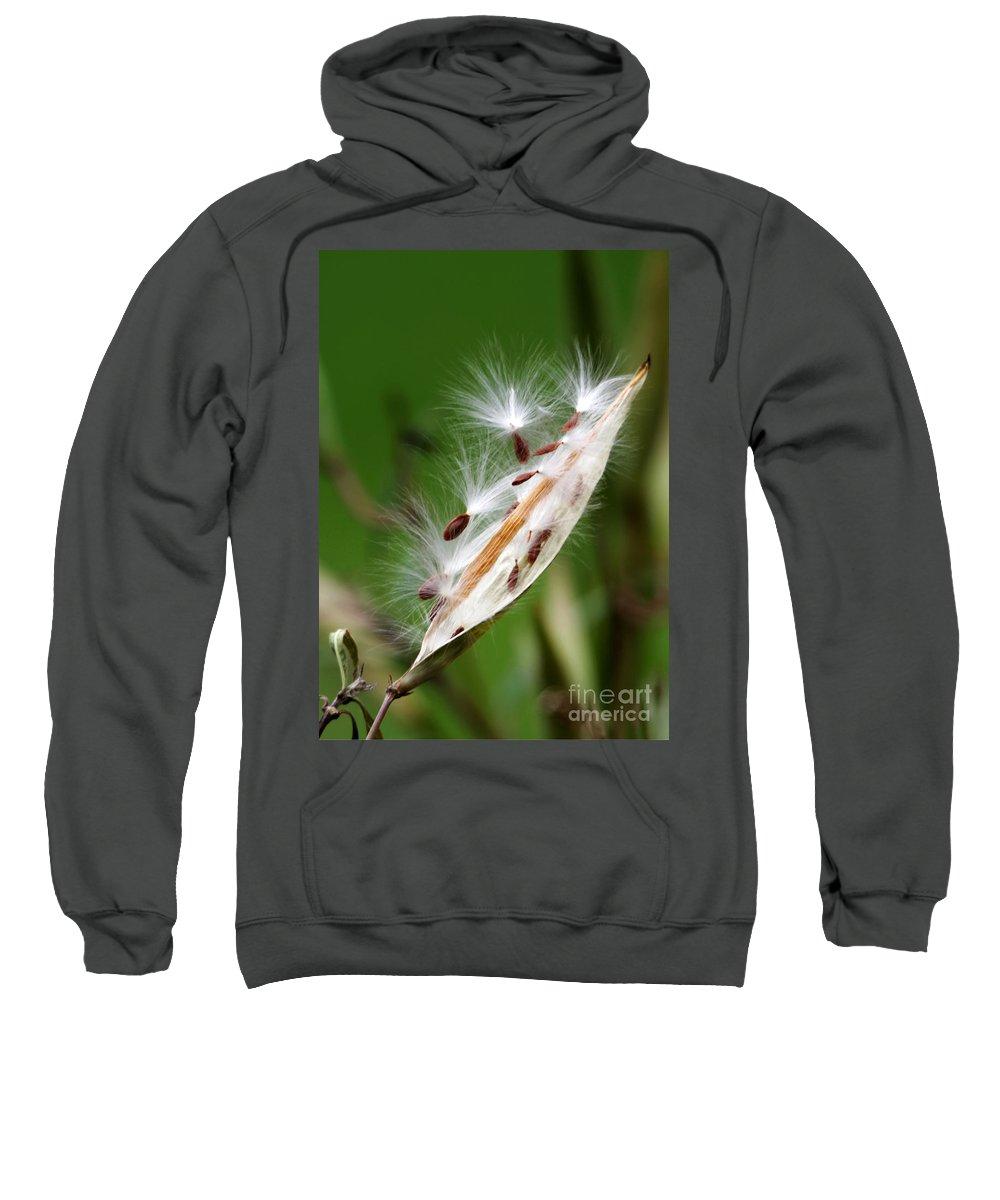 Macro Sweatshirt featuring the photograph Milkweed Whisper by Sabrina L Ryan