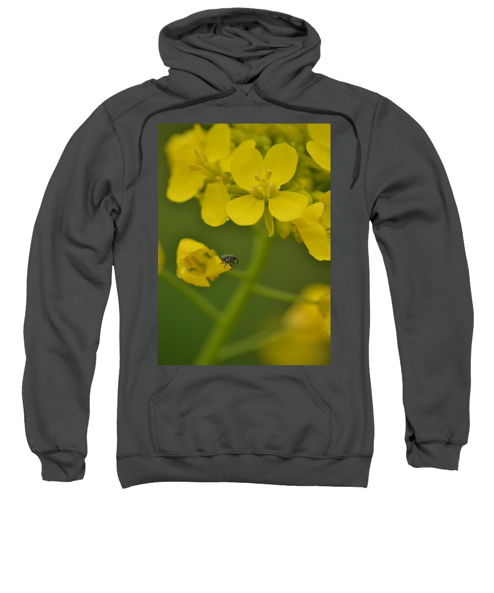 J.d. Grimes Sweatshirt featuring the photograph Minute Elephant by JD Grimes