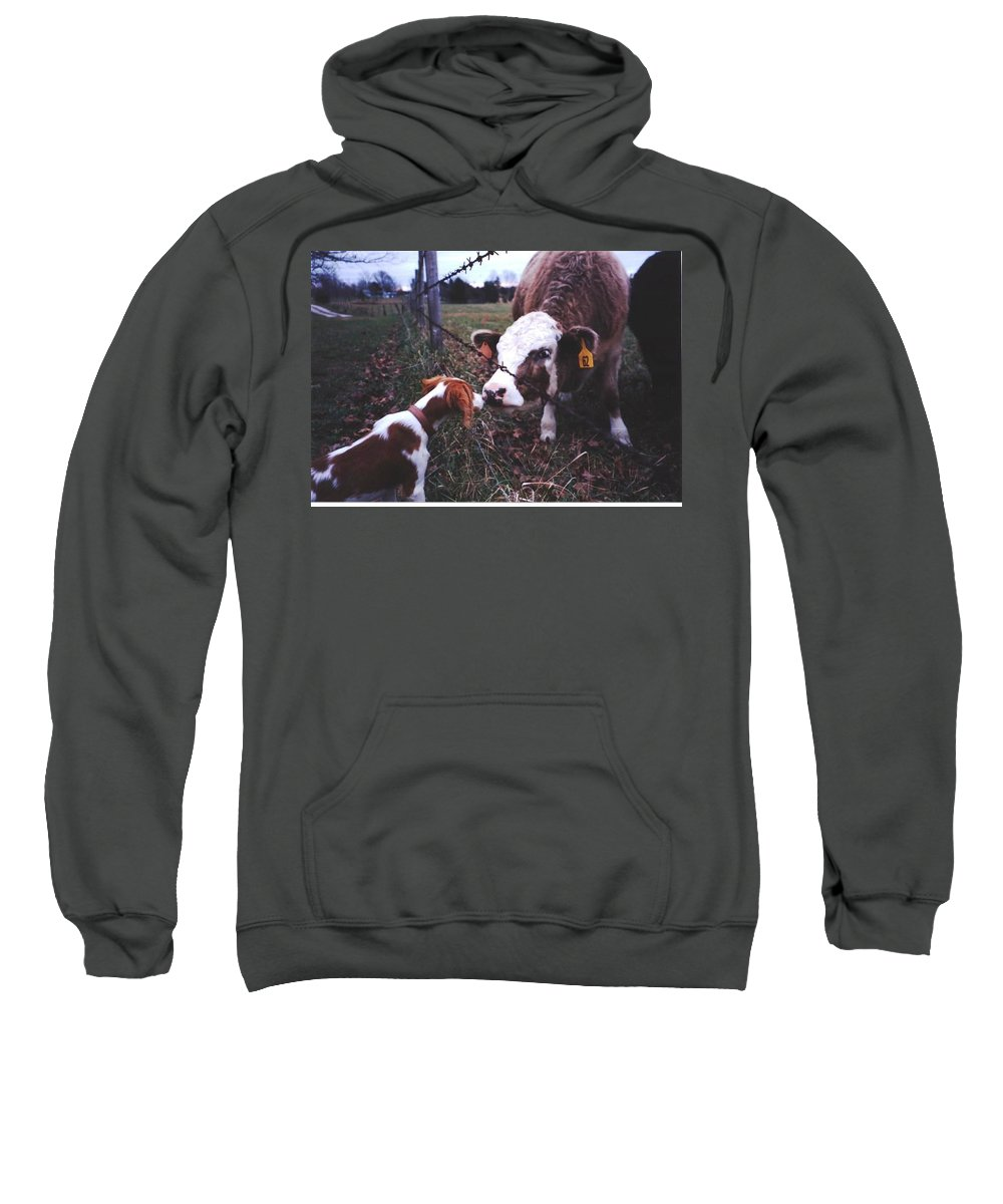 Cow Sweatshirt featuring the photograph Mistaken Identity by Kent Dunning