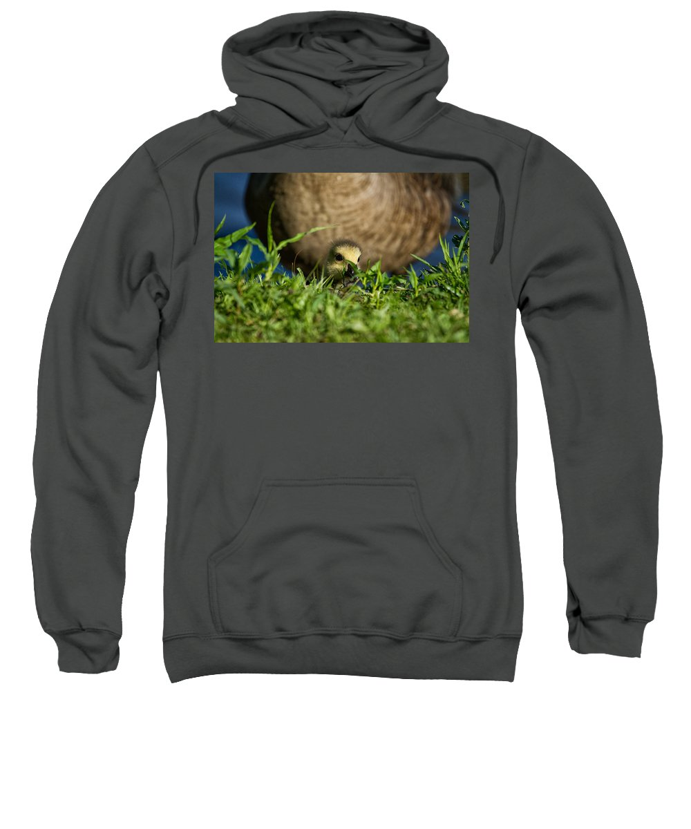 Geeseling Sweatshirt featuring the photograph Mom Is Close Behind by Karol Livote