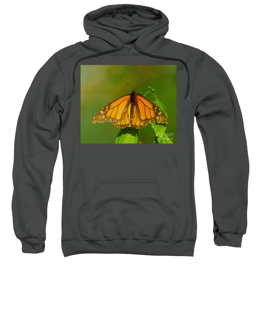Butterfly Sweatshirt featuring the photograph Monarch On Hackberry by Robert Frederick