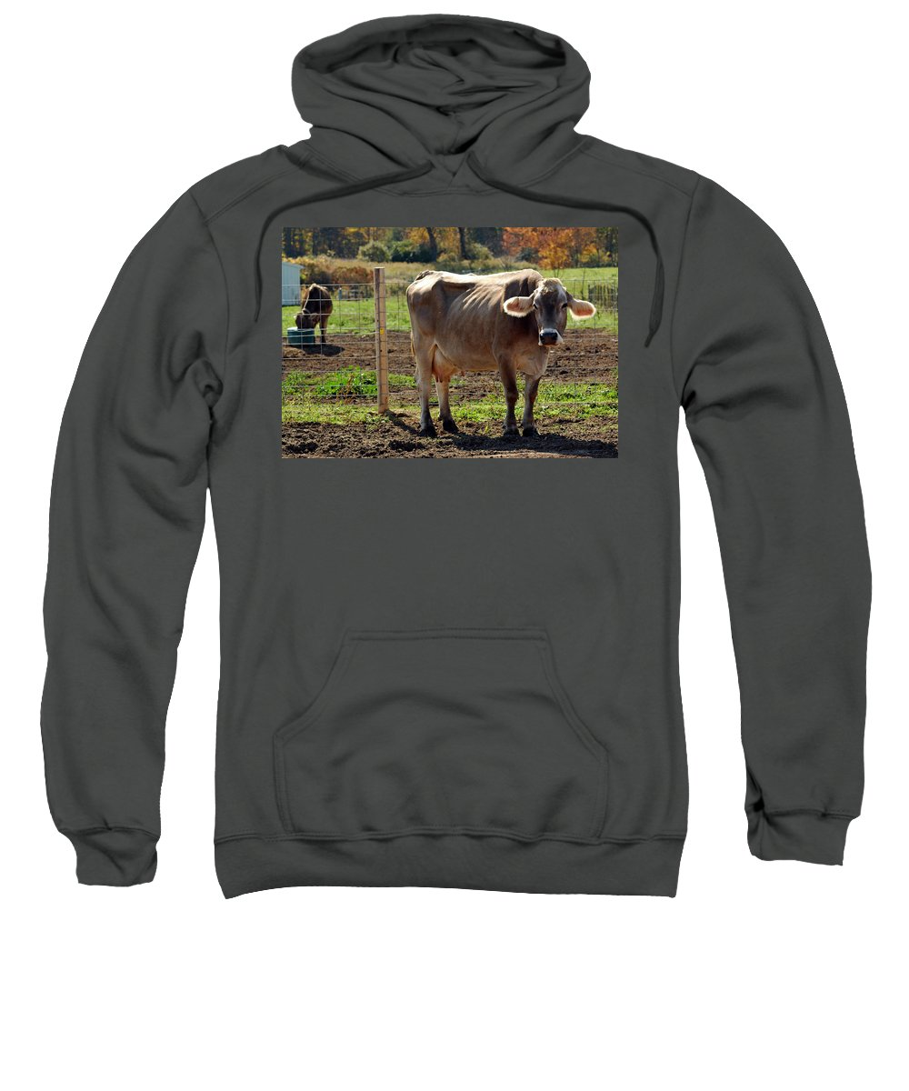 United_states Sweatshirt featuring the photograph Moos by LeeAnn McLaneGoetz McLaneGoetzStudioLLCcom
