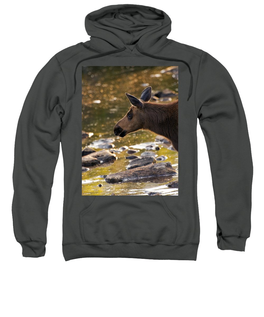 Moose Sweatshirt featuring the photograph Moose Baby 3 by Glenn Gordon