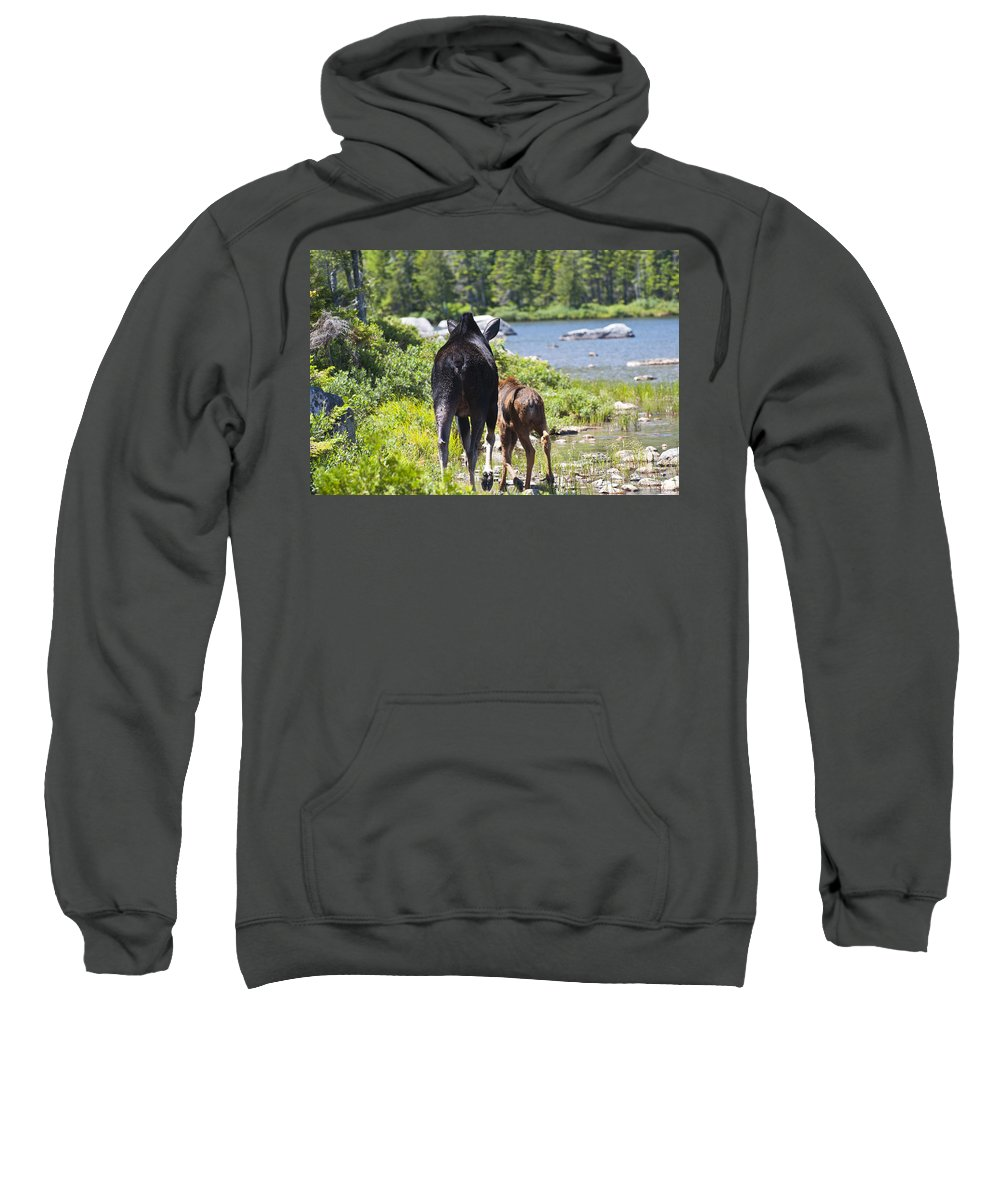 Moose Sweatshirt featuring the photograph Moose Ends Baxter State Park Maine by Glenn Gordon