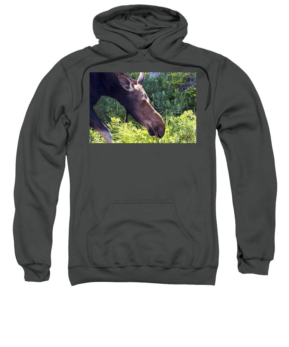 Moose Sweatshirt featuring the photograph Moose Profile by Glenn Gordon