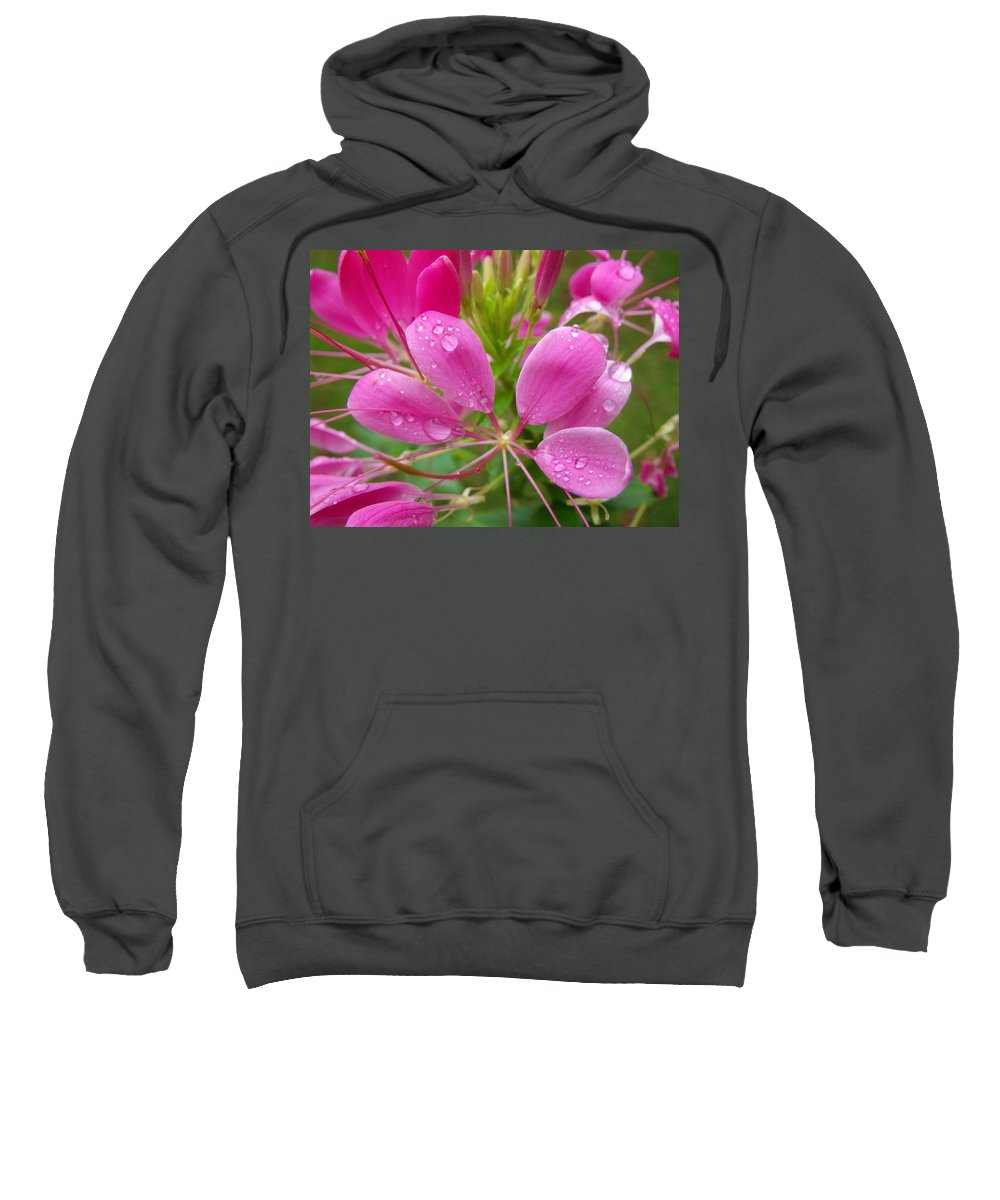 Cleome Sweatshirt featuring the photograph Morning Dew On Pink Cleome by Anna Ruzsan