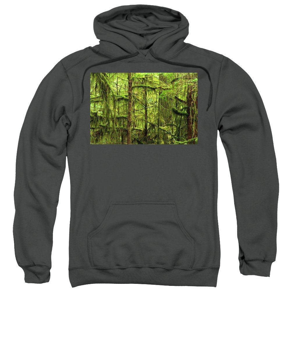 Branches Sweatshirt featuring the photograph Moss-covered Trees by Corey Hochachka