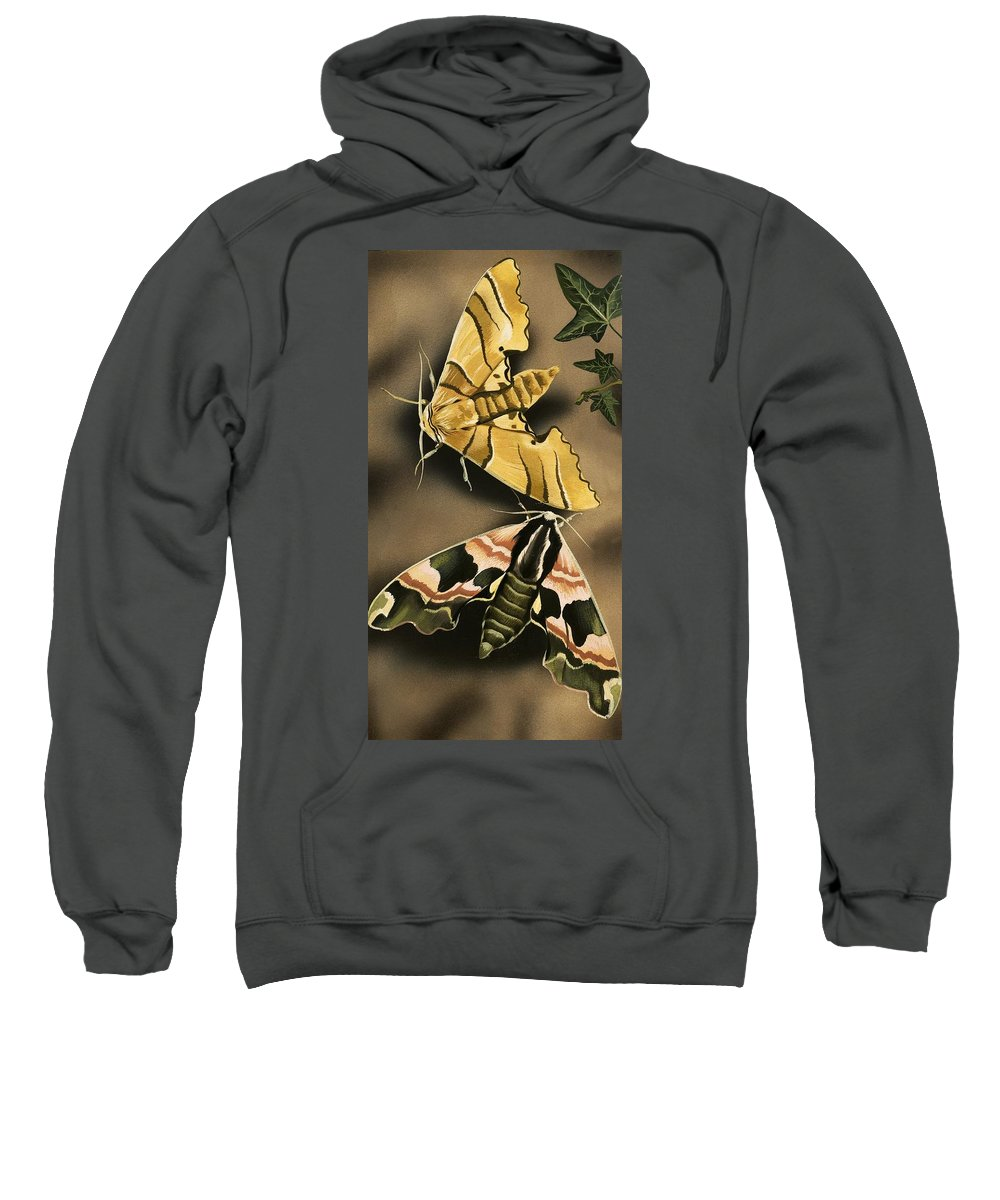 Animals; Nature; Wildlife; Countryside; Butterfly; Moth; Moths Sweatshirt featuring the painting Moths by English School
