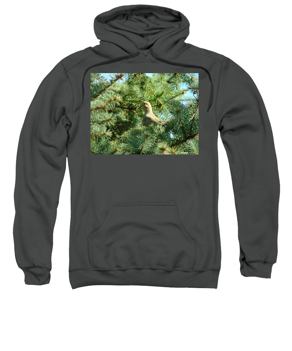 Mourning Sweatshirt featuring the photograph Mourning Dove by Dennis Pintoski