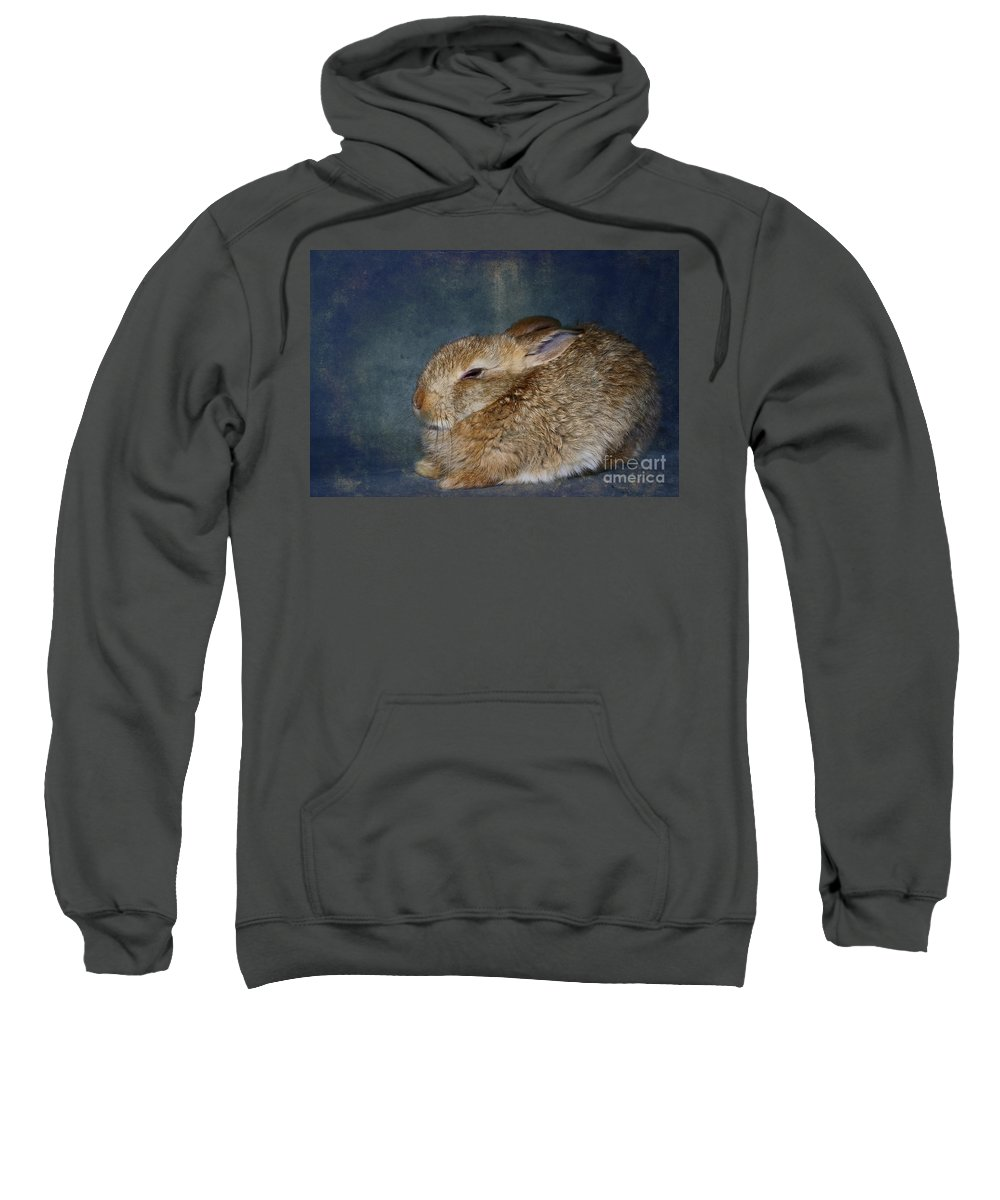 Rabbit Sweatshirt featuring the photograph Mr Canelle by Aimelle