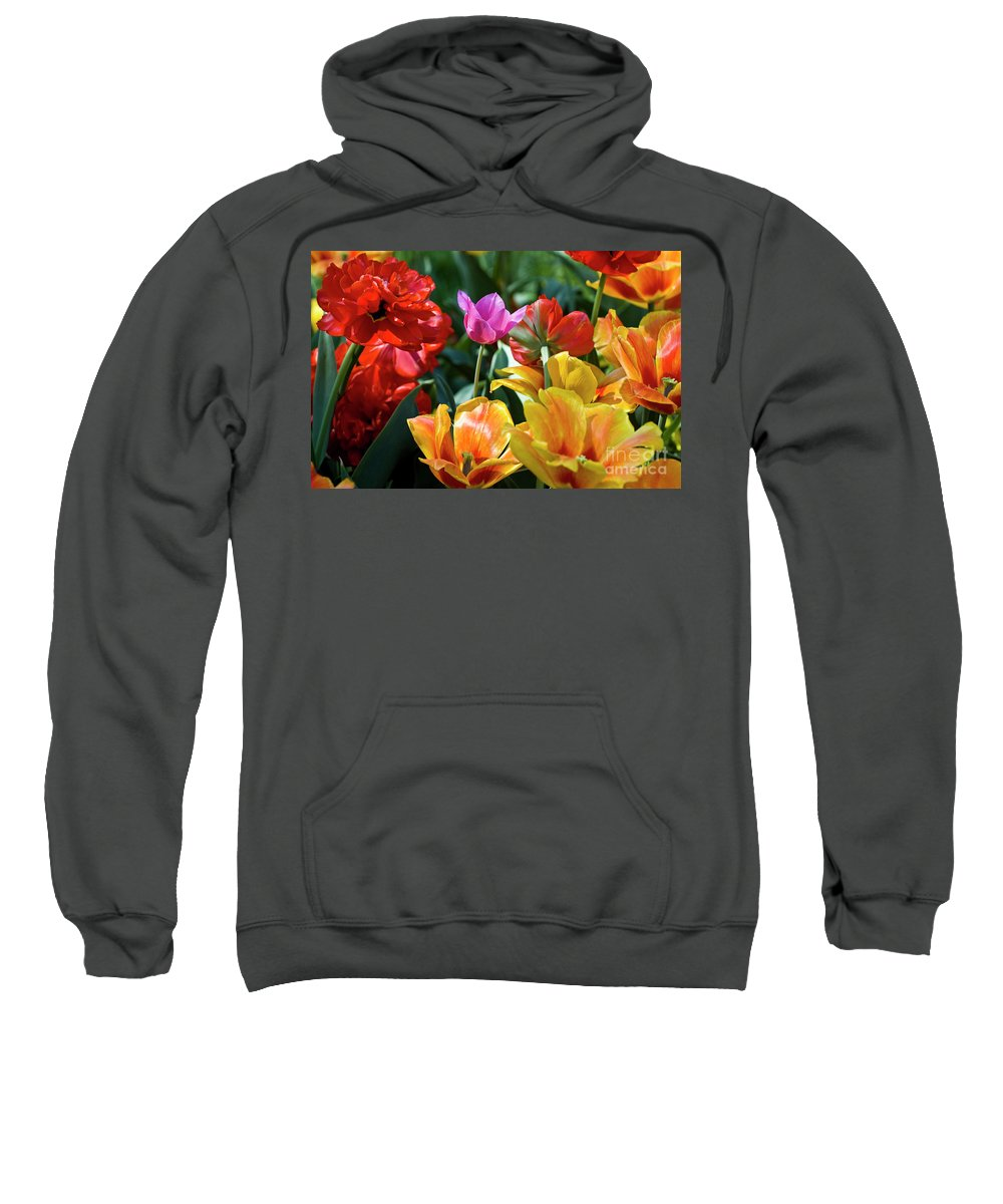 Spring Flowers Sweatshirt featuring the photograph Multi-colored Tulips In Bloom by Tim Mulina