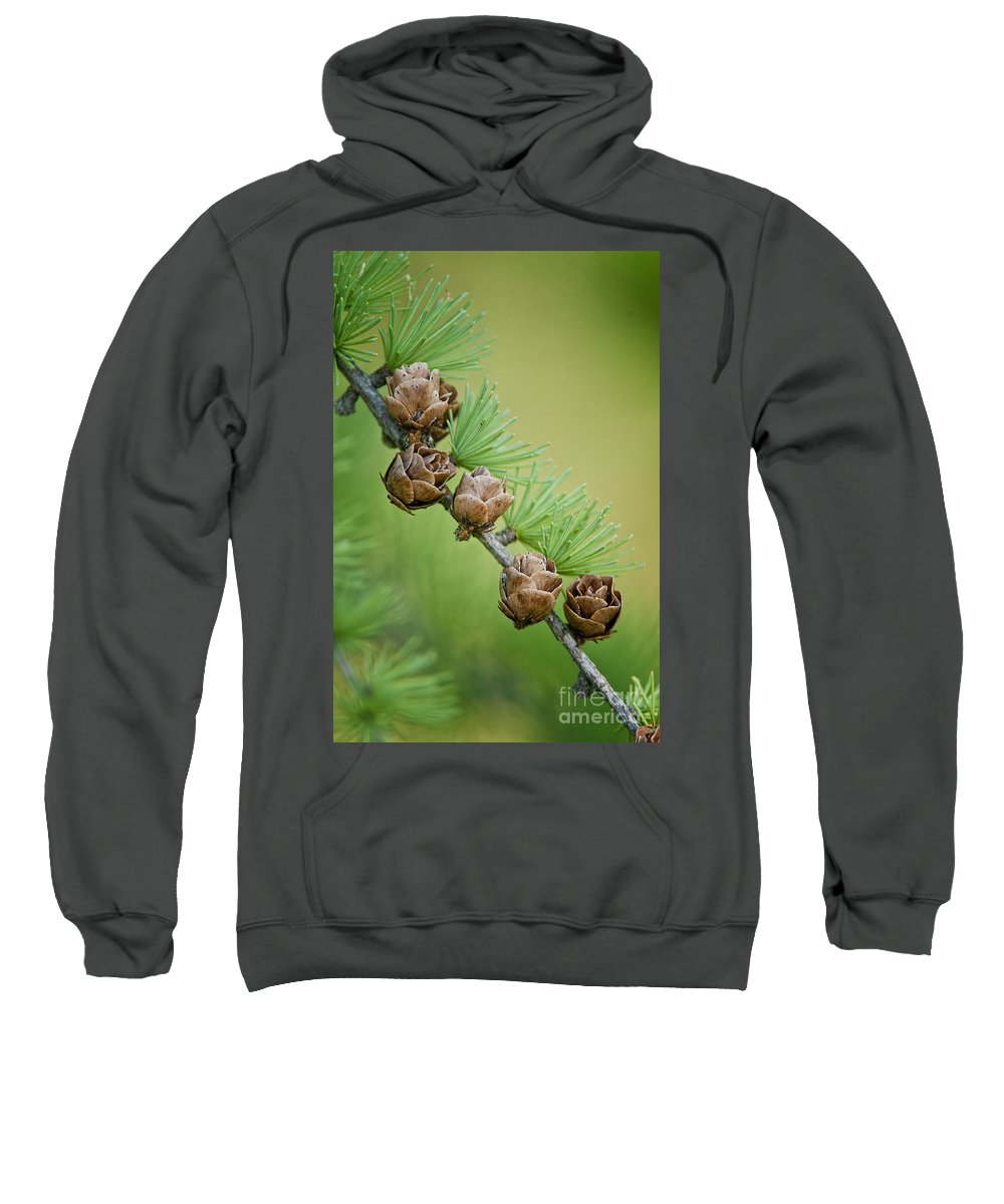 Abstract Sweatshirt featuring the photograph Nature's Abstract 4 by Michael Cummings