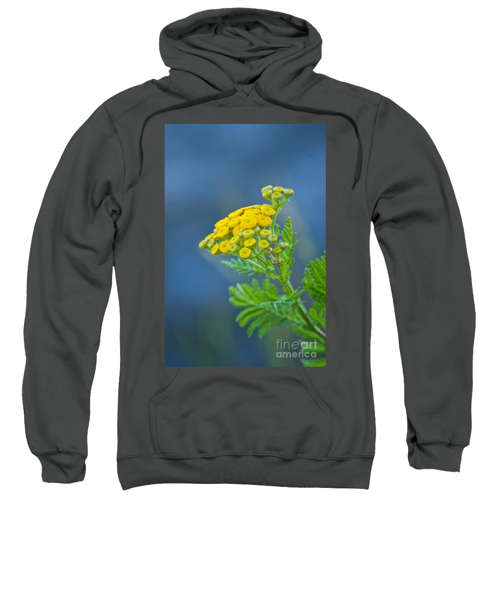 Abstract Sweatshirt featuring the photograph Nature's Abstract 6 by Michael Cummings