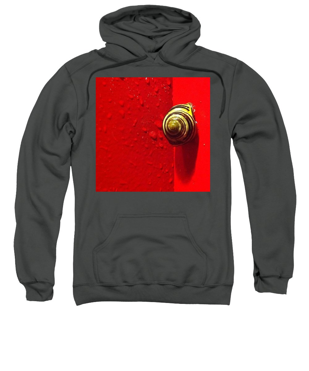Nofilter Sweatshirt featuring the photograph Never A Shortage Of #snails Back Here by Katie Cupcakes
