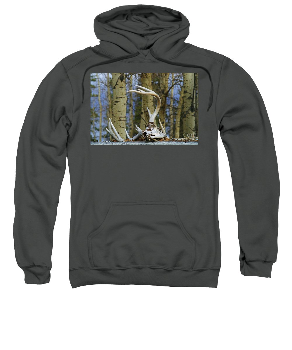 Skull Sweatshirt featuring the photograph Old Skull And Antlers by Randy Harris