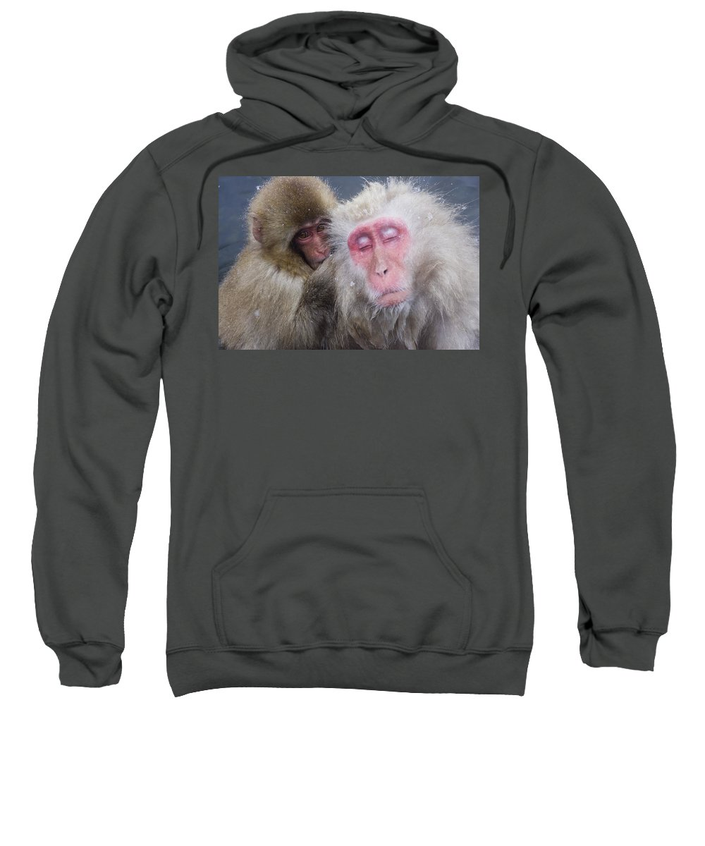 Winter Sweatshirt featuring the photograph Older Snow Monkey Being Groomed By A by Natural Selection Anita Weiner